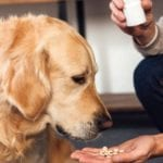Picture of a dog taking pills in order to answer the question how to give a dog a pill?