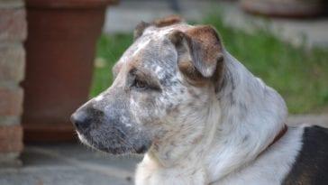 Black Spots On Dog's Skin