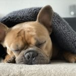 How To Treat Dog Ear Infection