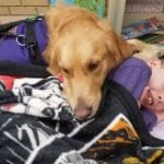 golden retriever takes care of boy with epilepsy in the school