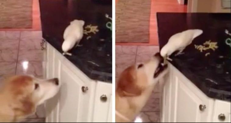 golden retriever best friend with parrot