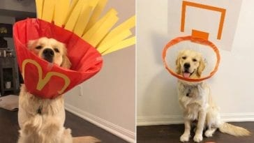 golden retriever wearing funny costumes