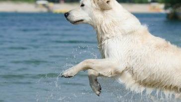 Melatonin Side Effects In Dogs