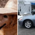 golden retriever found dead after being stolen with the car