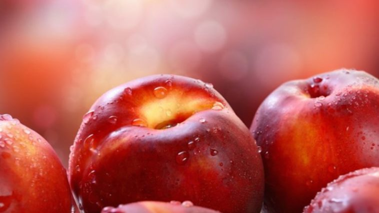 Pictures of nectarines in order to answer the question can dogs eat nectarines