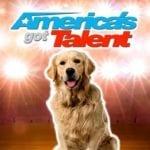 golden retriever singing on America's got talent