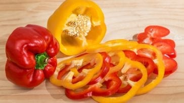 Can Dogs Have Bell Peppers?