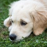 How To Take A Dog's Temperature