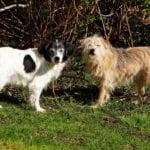 Boy Dogs vs Girl Dogs