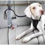 A dog sitting in the car while his owner wonders if a dog seat belt is really necessary