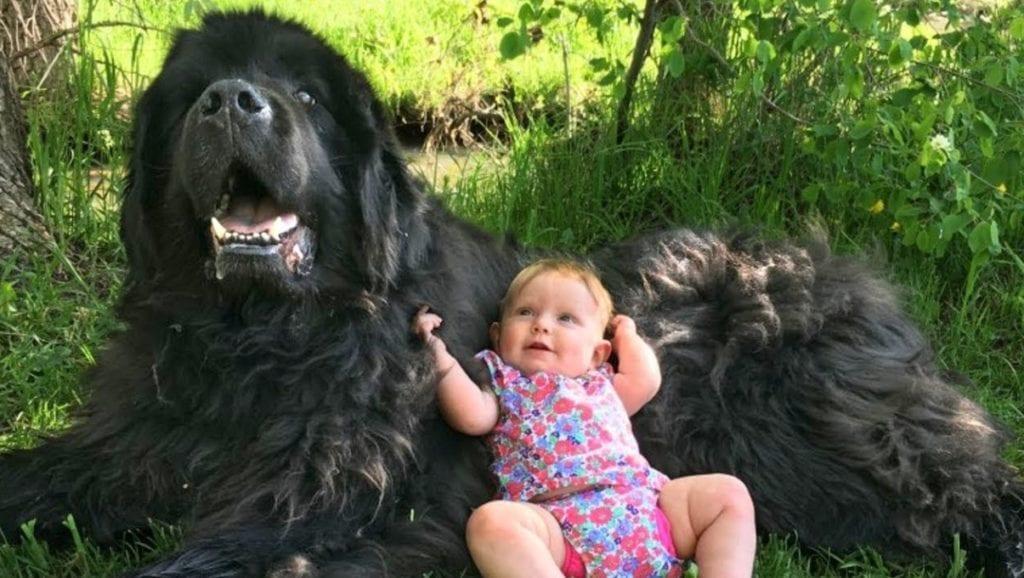 best big family dog