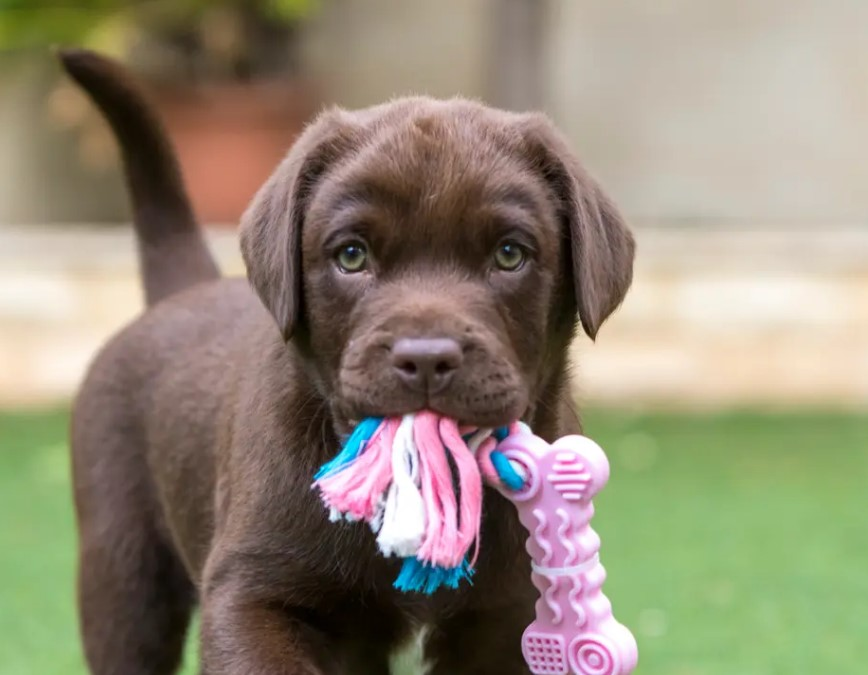 unique girl dog names for your puppy