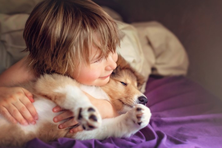 Collie best dogs for kids