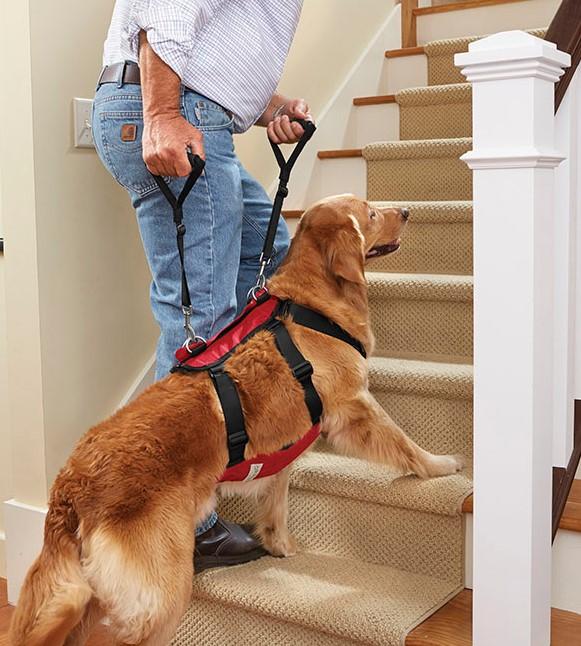 Best dog harness - Assist harness