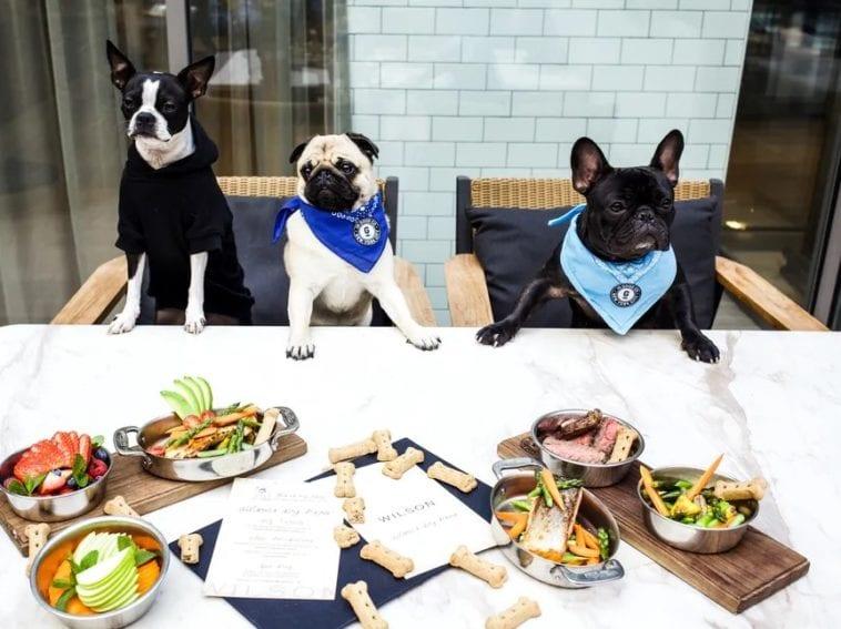 the willson dog-friendly restaurant