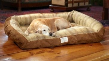 Dogs bed: golden retriever sleeping on the bed