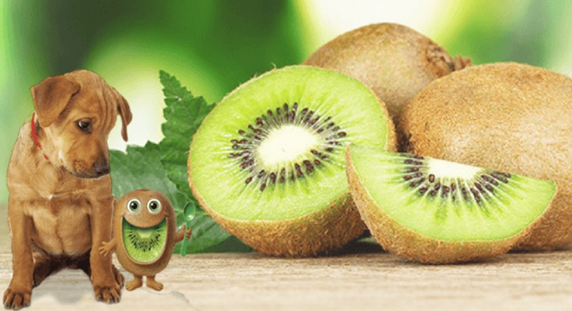 Picture of a dog and kiwi in order to answer can dogs eat kiwi