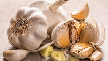 Is Garlic Bad For Dogs