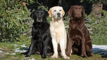 three different labs