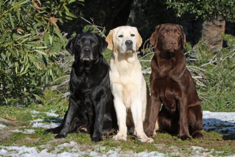 three different labs