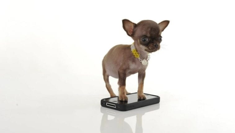 Milly, the smallest dog in the world