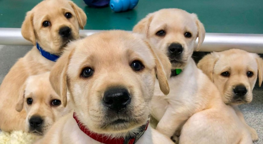 Picture of puppies in order to answer where to buy a dog
