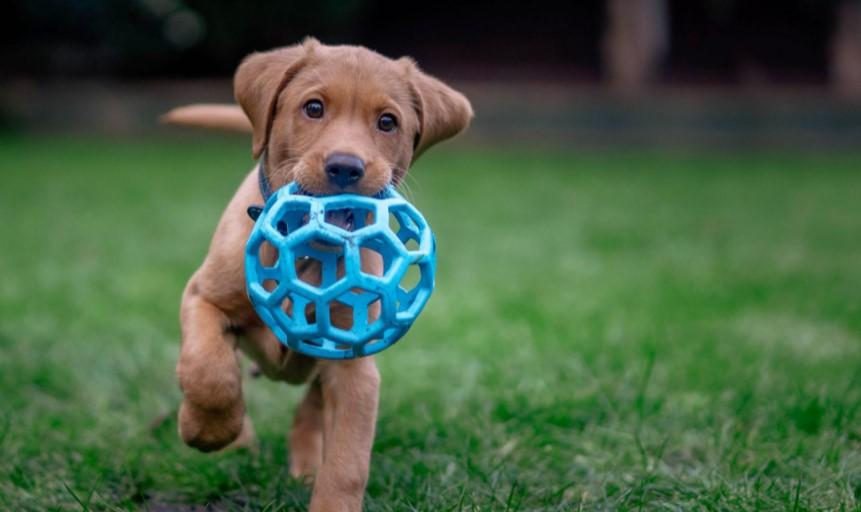 Puppy plaing