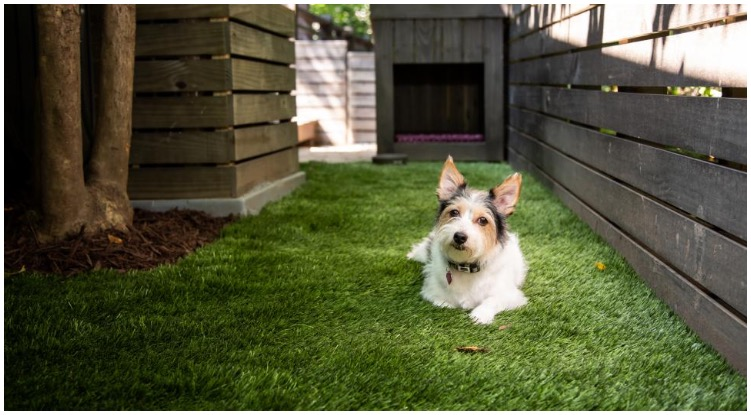 Loving dog owner planing to make a backyard dog run for his canine