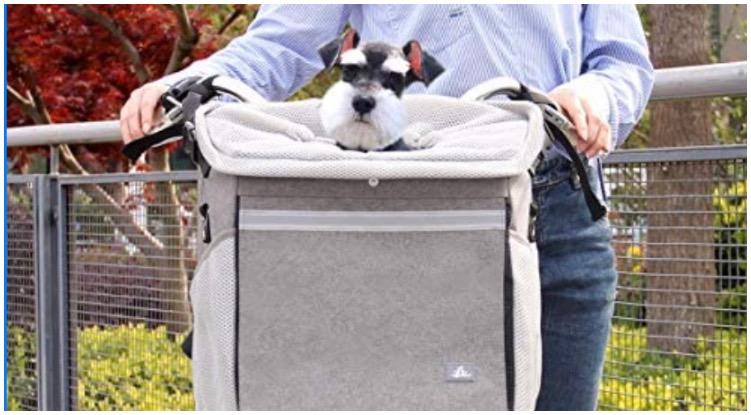 Canine enjoying an easy ride on the bike