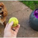 Dog owner wanting to play with his canine and their dog ball launcher