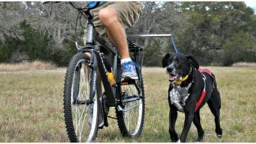Owner biking around with his cute canine and their dog bike attachment