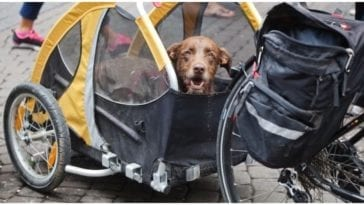 Dog owner wanting to try out his new dog cart for bike