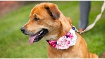 Dog owner hand made the most adorable flower dog collar