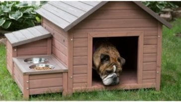 Dog laying in the hot summer heat while his owner wants to buy a dog house with AC