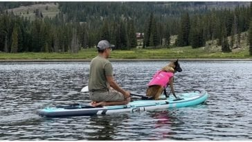 Happy canine owner teaching his dog how to paddle board