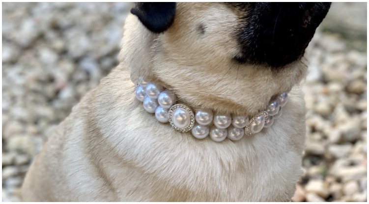 An absolutely stunning pearl dog collar made by the brand Olive & Pearl