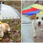 Two absolutely adorable dogs wearing different options of a dog umbrella