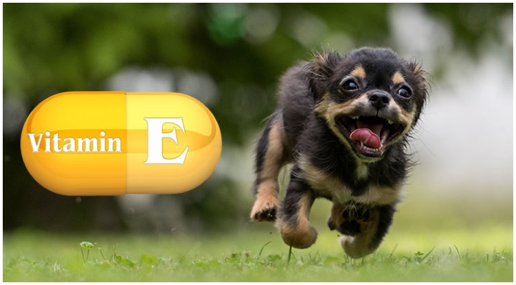 Dog owner wondering about the needed levels of vitamin e for dogs