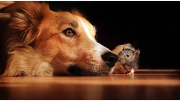 Worried dog owner wondering about the ways vitamin k1 for dogs could help for rat poisoning