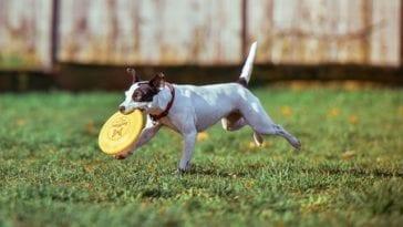 dog at off leash dog park