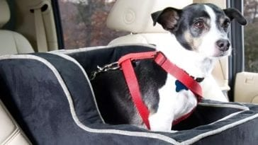 picture of a dog car bed