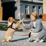 Dog Sign Language: