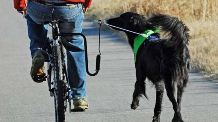 Dog bike leash and dog running