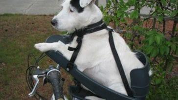 dog sitting in a dog bike seat
