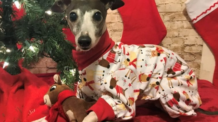 merry christmas dog pajama