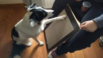 Dog Scratchboard