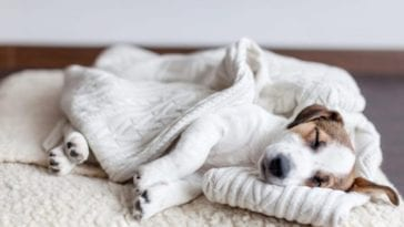 Picture of a dog sleeping with a dog bed frame