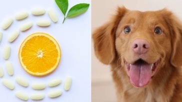 vitamin c for dogs