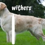 Dog Withers