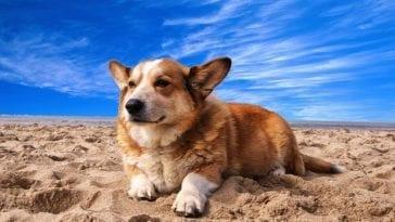 dog friendly beaches in florida
